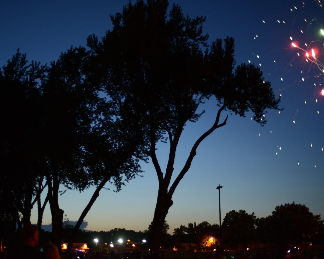 Low Angle View Of Firework Display And Silhouette Trees At Night