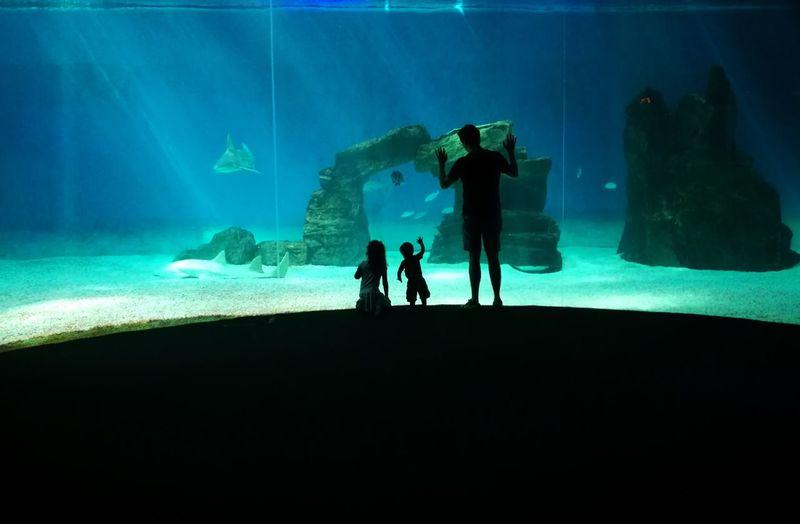 AcquariodiGenova Family And Shark 🦈