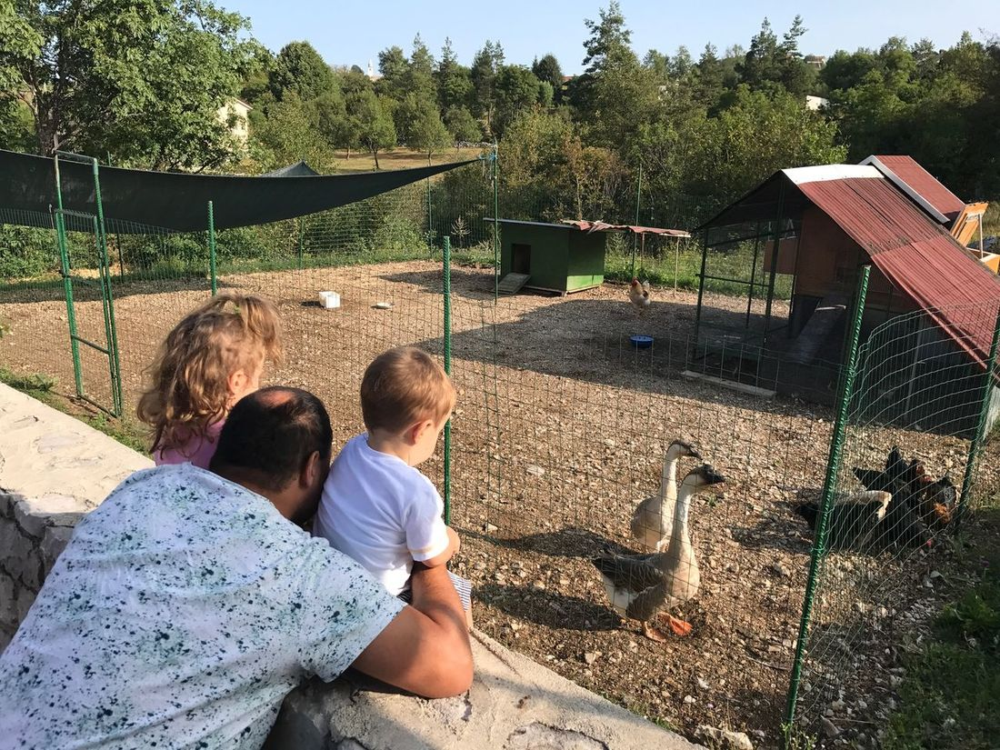 EyeEm Selects Animal Themes Togetherness Bird Childhood Zoo Boys Day Animal Wildlife Animals In The Wild Bonding Mammal Leisure Activity Lifestyles Real People Outdoors Tree Child Nature Domestic Animals Friendship Family House