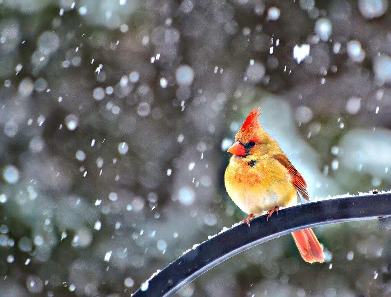 Beautiful stock photos of birds, Animal Themes, Animals In The Wild, Bird, Colorful
