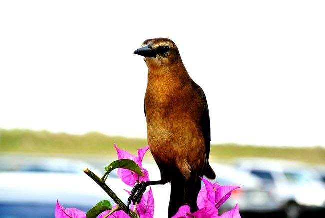 Everglades sight seeing Taking Photos Check This Out Hello World Enjoying Life Birds Flower