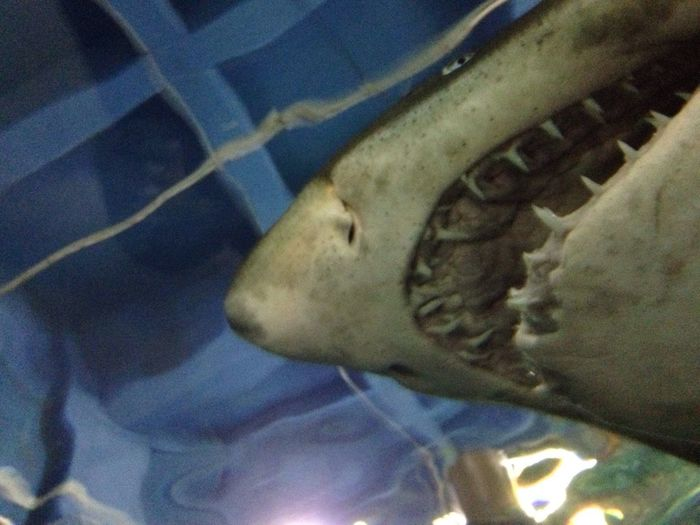 JAWS...