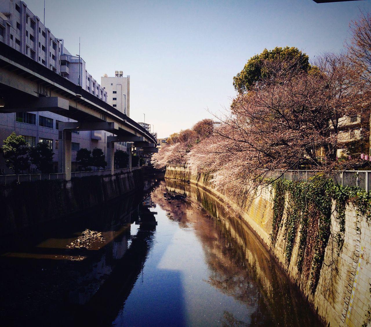 桜 神田川 江戸川橋 椿山荘 関口 Tokyo Relaxing