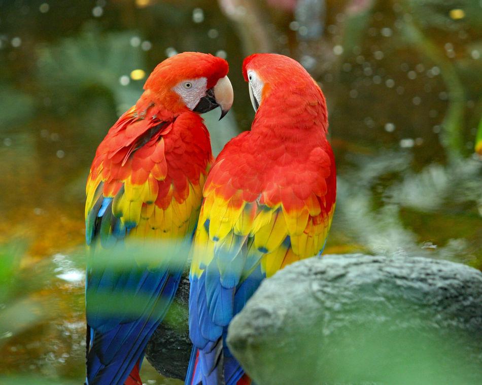 Beautiful stock photos of love,  Animal Wildlife,  Animals In The Wild,  Beauty In Nature,  Bird