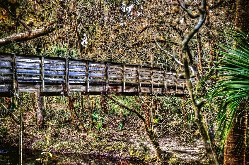 Bridge Wood Bridge Taking Photos Nature Hiking Getting In Touch Forest