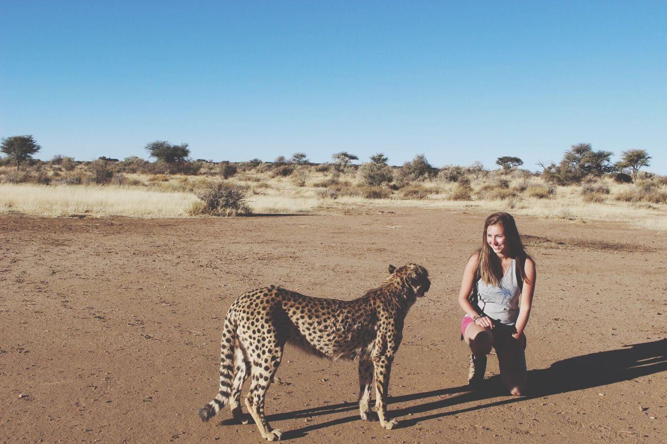 Animals Southern Africa Amazing Cheetah Africa Namibia Wildlife