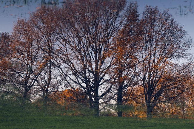 Elements 180° Baum Beauty In Nature Bäume Colors Countryside Kleiner De-Witt-See Kopfüber Nature Nettetal No People Outdoors Reflection Scenics Seewhathappenswhenyouflipanimageupsidedown Sky Spiegelung Tranquil Scene Tree Tree Upside Down Wasser Water Wien The Magic Mission