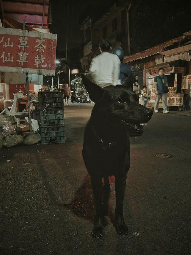 你牙齒怎麼啦〜(≧▽≦) 台灣犬❀小黑zzz… Animal Themes Funny Taiwanese Dog Tooth😂... Old Town Night Old Street From My Point Of View Light And Shadow Night Lights One Animal Capture The Moment Overnight Success Street Photography Streetphotography Everybodystreet The Important Thing Is To Participateなんちゃってmission The View And The Spirit Of Taiwan 台灣景 台灣情 Eye4photography  Snapshots Of Life VSCO at 深坑老街 in Taiwan (related photo) http://www.eyeem.com/p/82707183