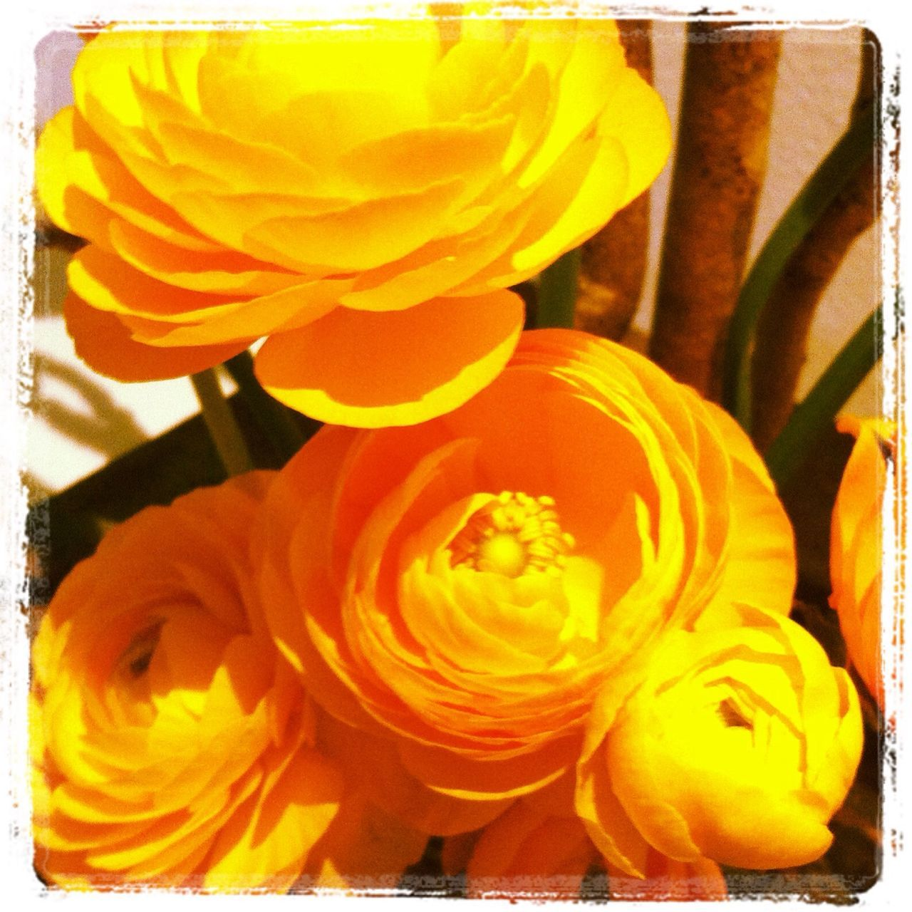 flower, yellow, no people, close-up, petal, full frame, fragility, flower head, beauty in nature, freshness, nature, indoors, day