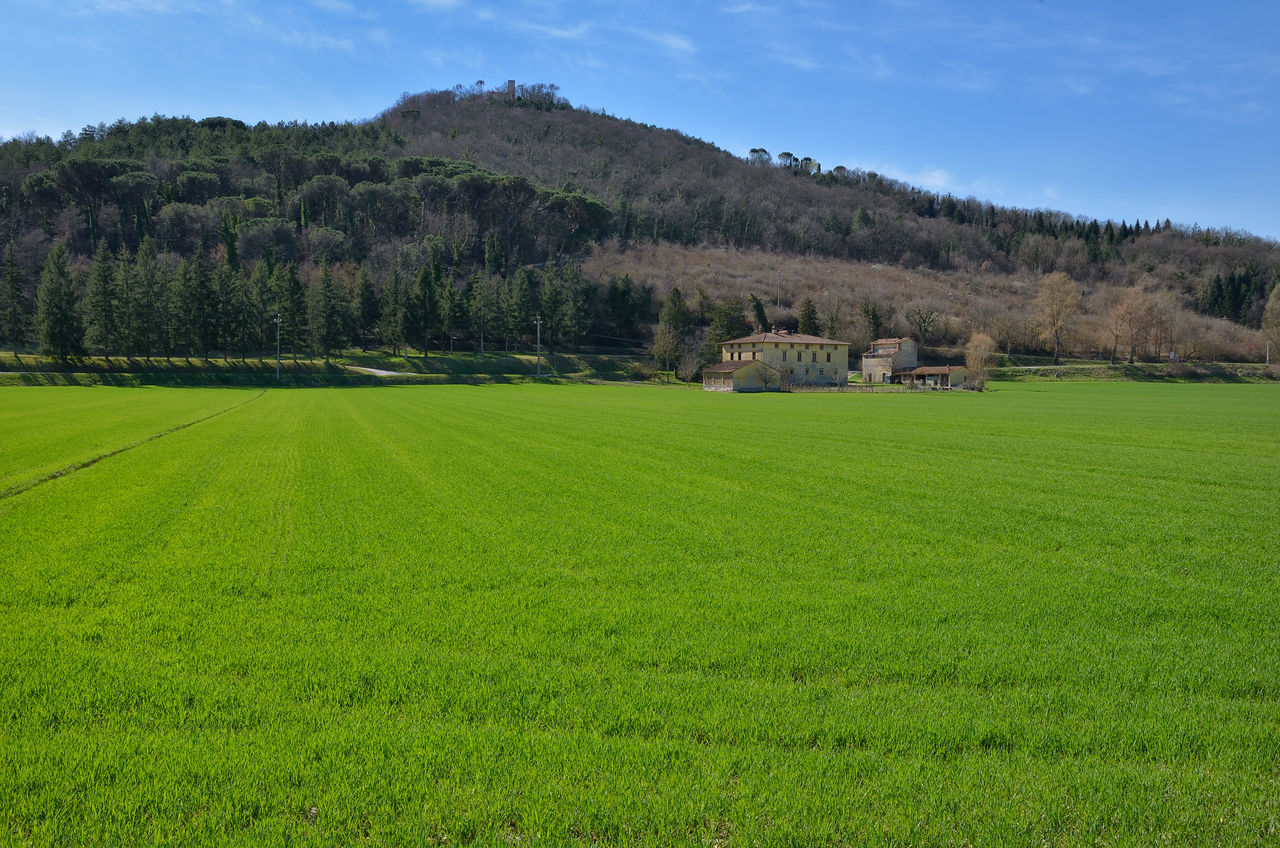 agriculture, field, green color, growth, tree, farm, landscape, nature, rural scene, beauty in nature, tranquil scene, crop, scenics, tranquility, grass, day, outdoors, no people, sky, mountain