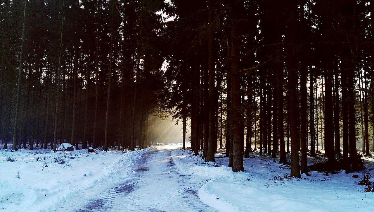 Winter sun stronger than shadows😊 Play Of Lights Sun Shadows Nature Peace