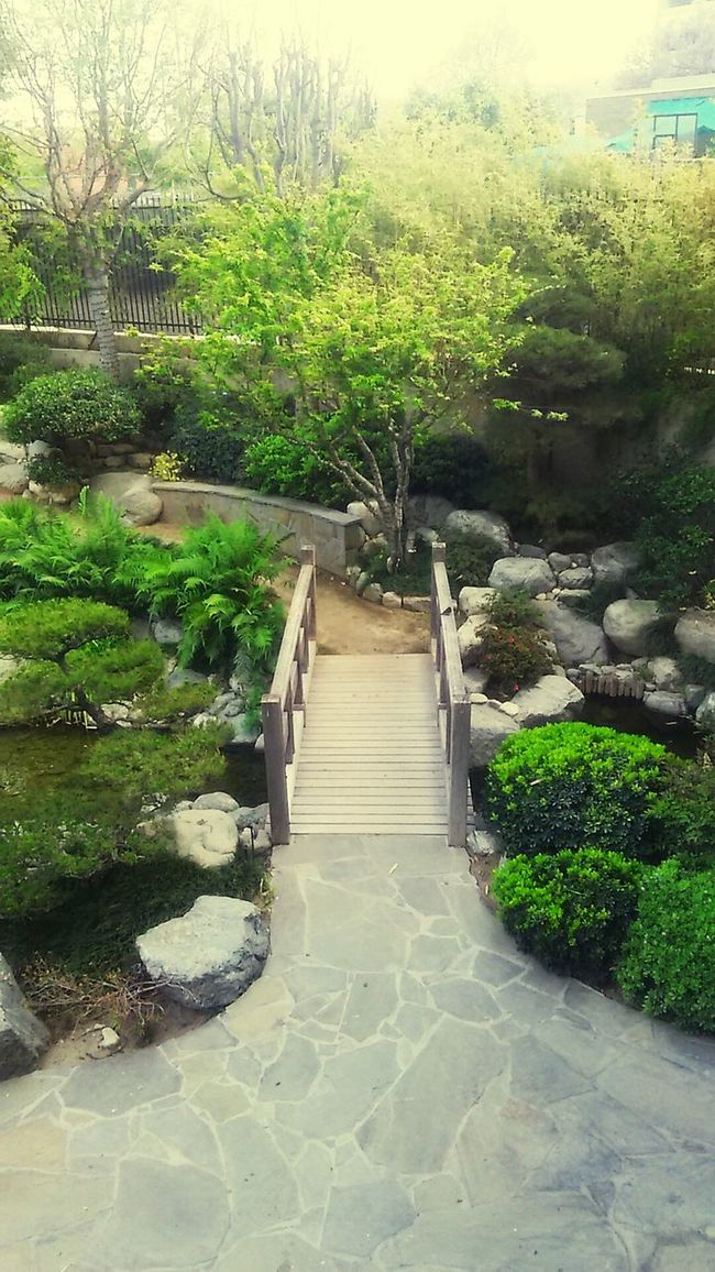 Japanese garden. The beauty of Japan Japanese Culture Japan Nature Natural Beauty Green Garden Wildlife Amazing View Amazing_captures