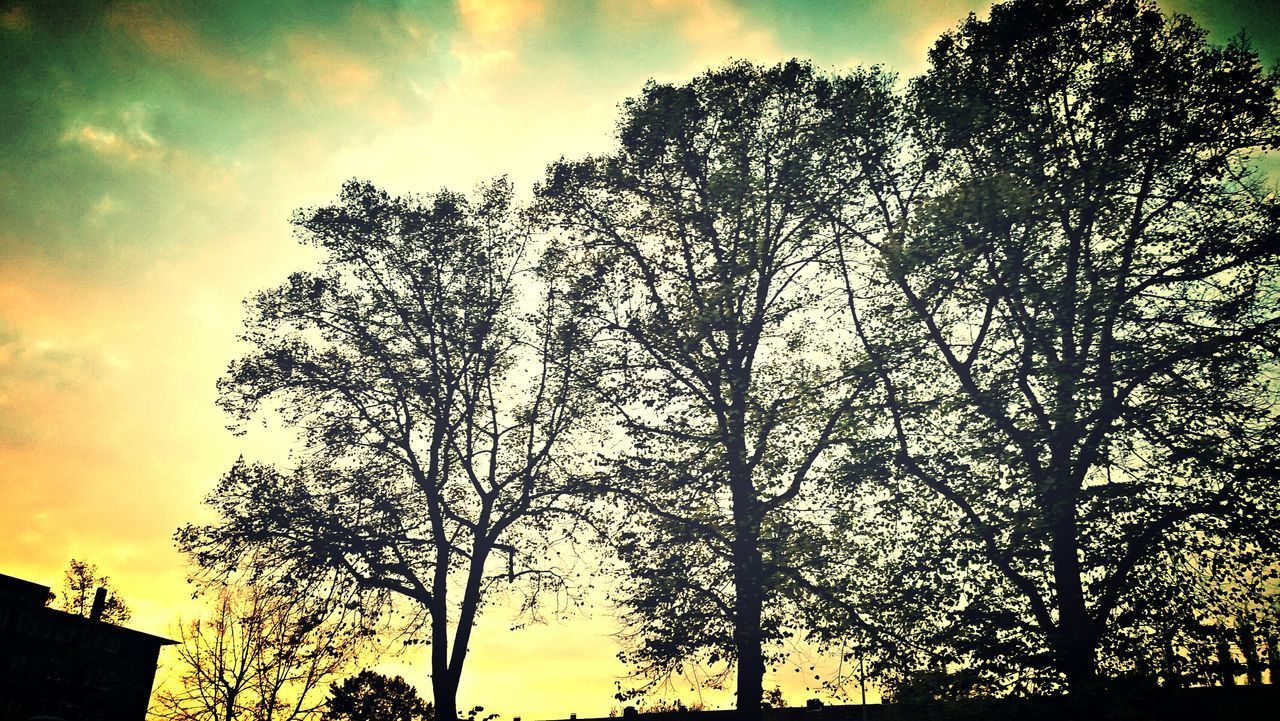 tree, nature, silhouette, sky, beauty in nature, sunset, low angle view, tranquility, outdoors, scenics, growth, no people, branch, day