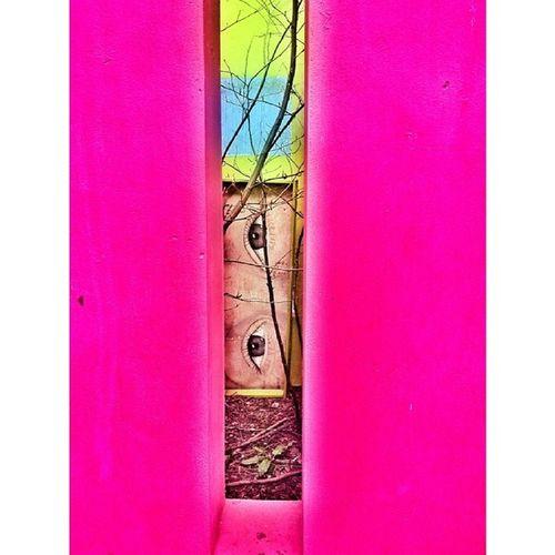 Springfields Spalding  Ingiltere Greatbritain uk england uk_photooftheday garden unitedkingdom secretgarden vsconature nature_uc nature nature_s_perfection vsco vscoism vscogram TagsForLikes vscocam picoftheday photooftheday follower follow followme ig_photo instaphoto instacool instamood instagood ig_mood