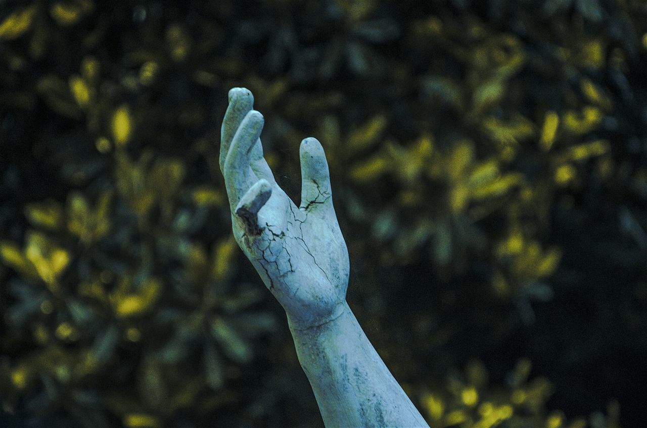 Just grab my hand // Close-up Outdoors Statue EyeEm Best Shots Buenosairesciudad Mano Hand Expression Connected With Nature Agameoftones Eyeemphotography EyeEm Beauty In Nature No People Nature Tranquility Ciudad Autónoma De Buenos Aires Carlosthays Jardinbotanico Lanochedelosjardines Buenosaires Palermo Eyeemphoto Tree Photography