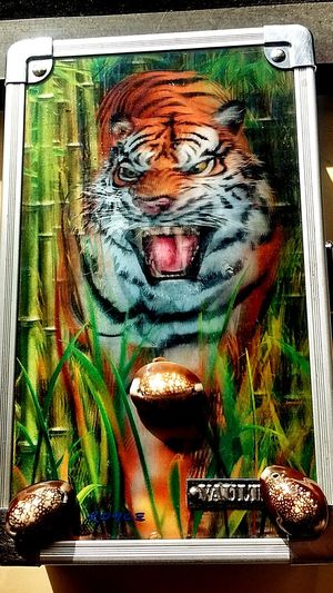 Tiger tool box with 3 cowrie shells..... Check This Out Research And Development Healing Place  Psychedelic Reality Time Travel Loving Life! ! ! Expect To Win! That's Me