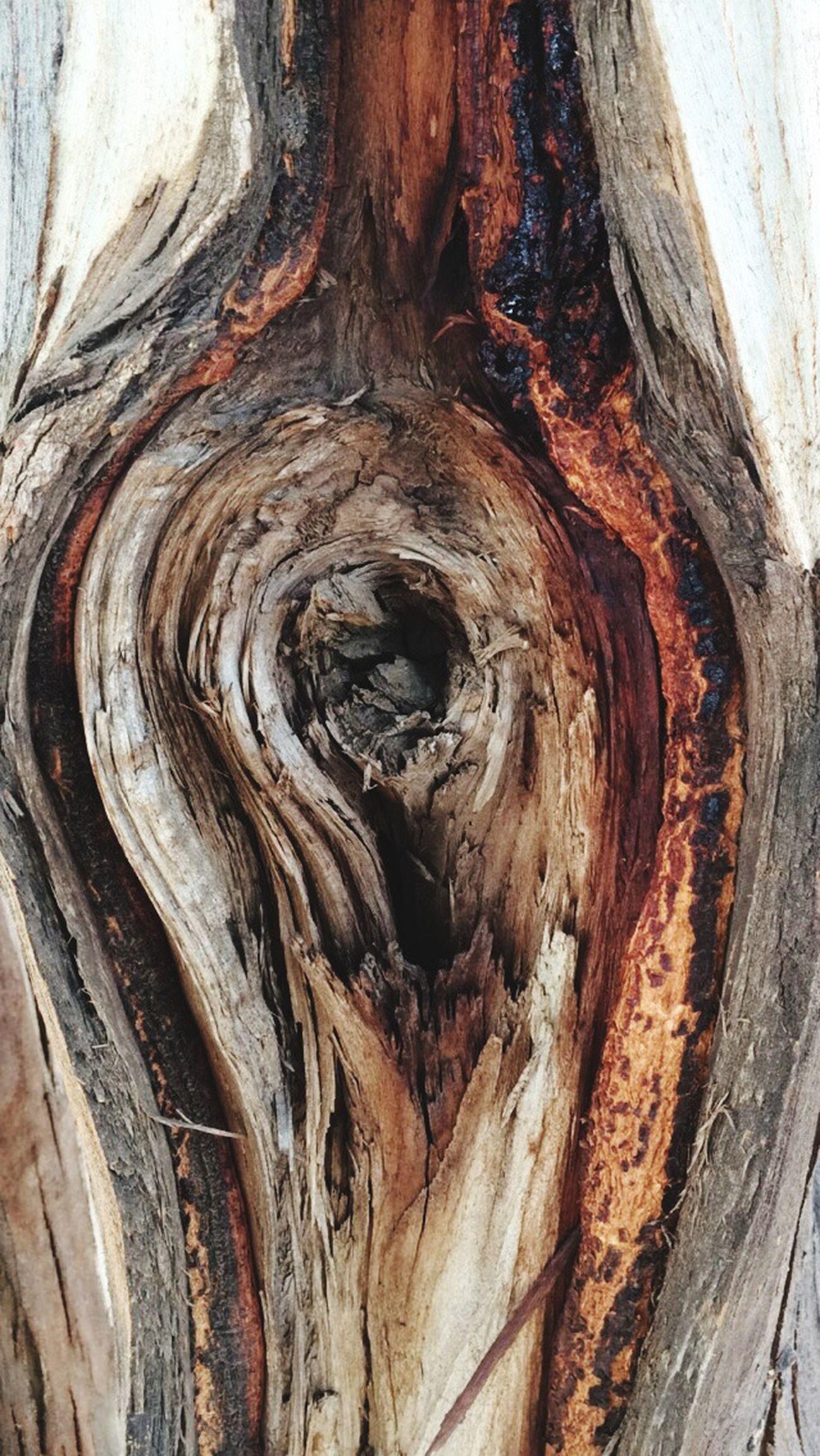 Beautiful Mothernature Look Inside Nature Woods Heartofthe Trees