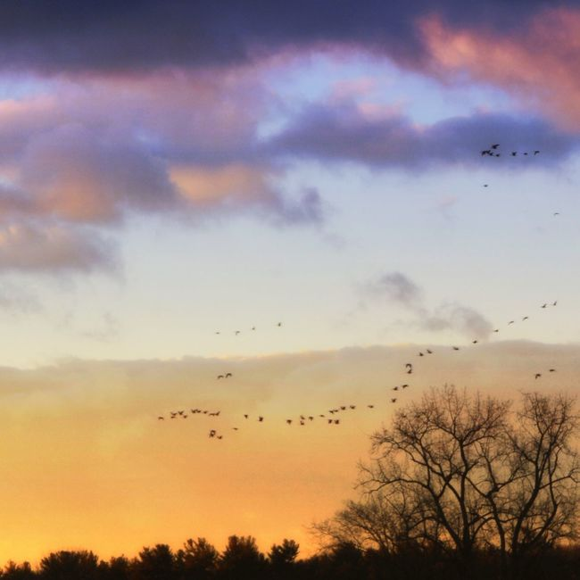 Sky Birds Sunset Landscape_Collection Rural Scenes Tree And Sky Nature's Beauty