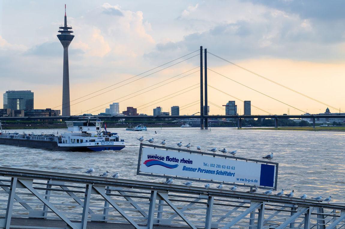 Rheinufer, Duesseldorf, Germany Blue Bridge Bridge - Man Made Structure Deutschland Duesseldorf Düsseldorf Germany Gull Möwe Pastel Power Pier Rhein Rheinturm  Rheinufer Waterfront