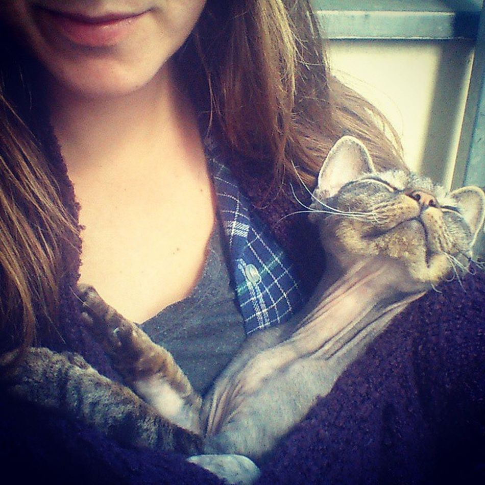 Rubberchicken Catinmyshirt HappyCat Whereisthesun Cat Catlady Devonrex