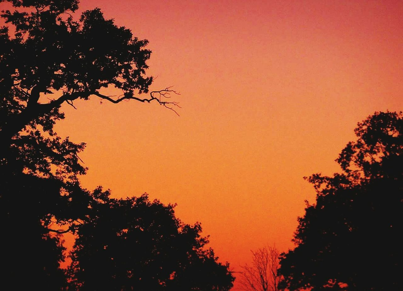 tree, silhouette, sunset, nature, beauty in nature, orange color, growth, no people, sky, scenics, outdoors, tranquility, tranquil scene, clear sky, low angle view, branch, day
