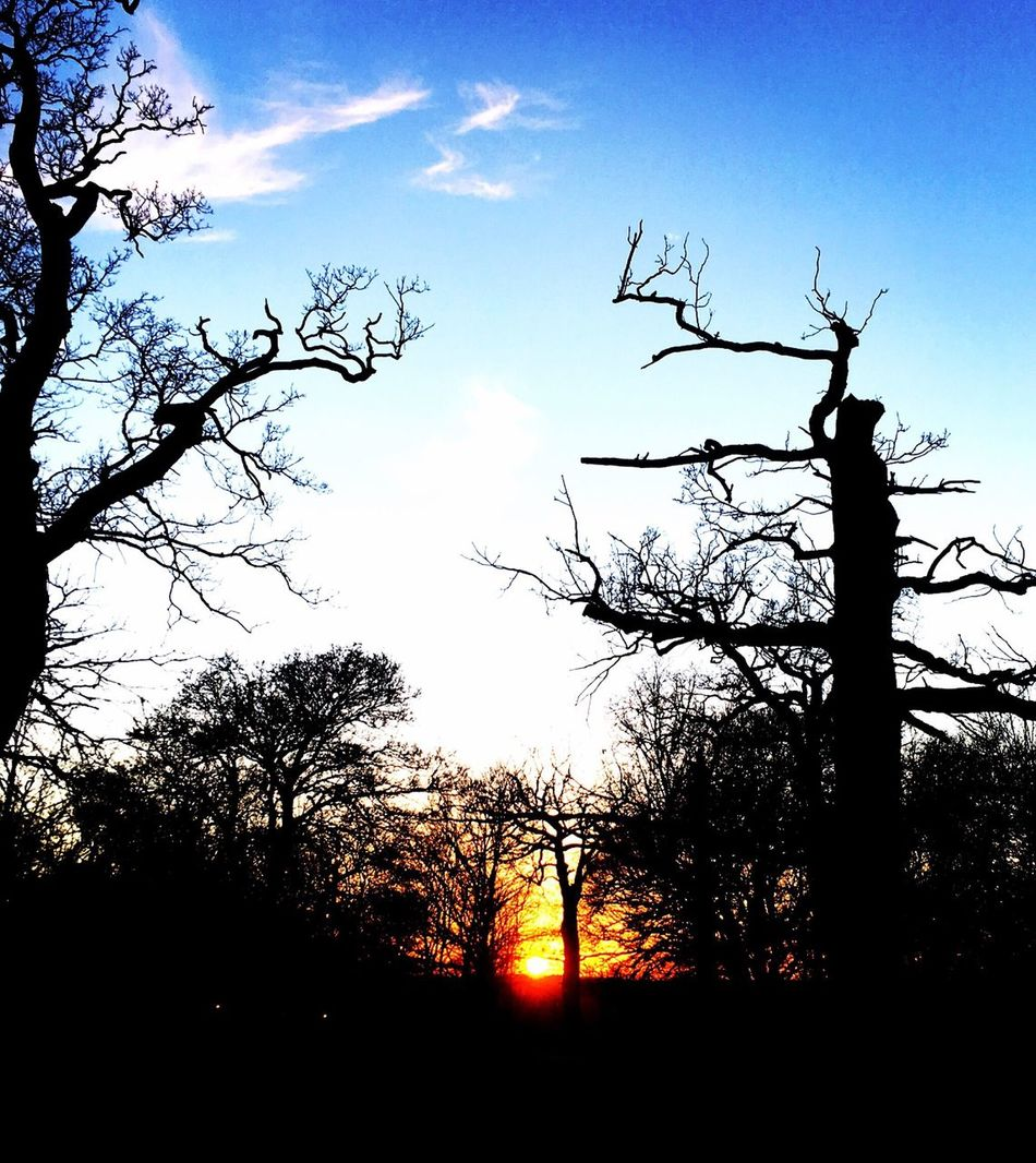 Norwich sunset, beautiful! Check This Out Colours Sky Hello World Blue Sky Norfolk Uk Tree Silhouette Sunset Sun