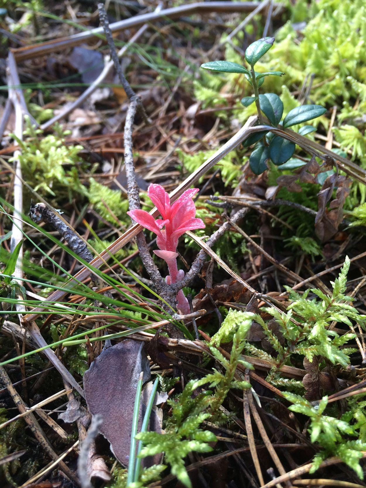 Check This Out Hello World Enjoying Life Colour Of Life цветы цветок  цветы🌸🌼🌻💐🌾🌿 цветочки красиво природароссии красота России Тверская область лето природа и красота Лес лес и природа