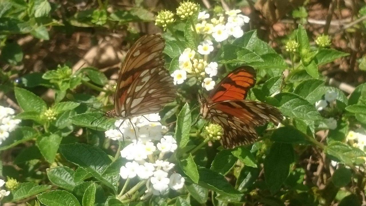 Campinas, São Paulo, Brasil Semfiltro XperiaZ1 Natureza 🐦🌳 Parquedasaguas Buterfly