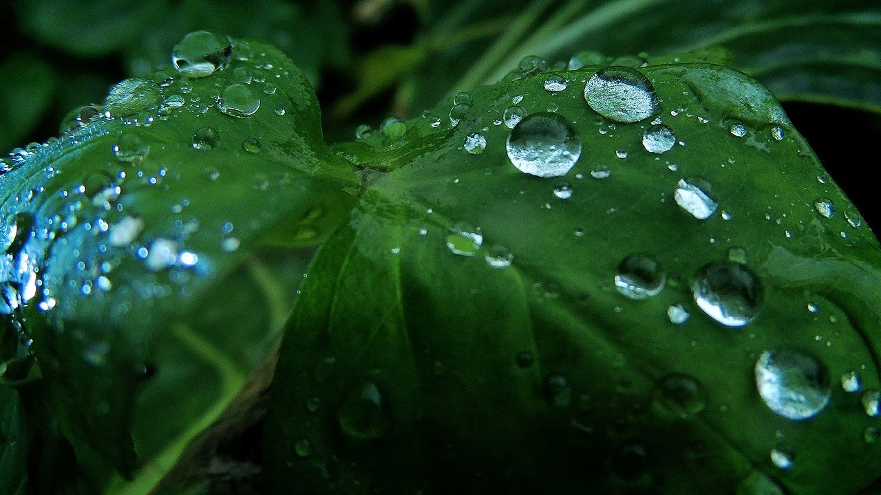 drop, water, wet, leaf, raindrop, nature, droplet, water drop, green color, close-up, rain, freshness, beauty in nature, rainy season, fragility, growth, no people, outdoors, purity, plant, day