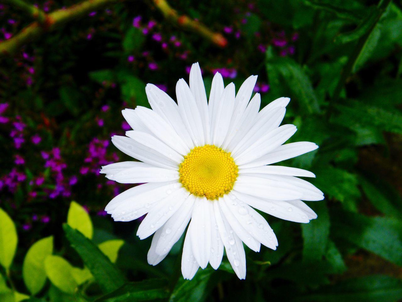 Showcase: November Eyem Nature Lovers  Eyem Flowers for all nature lovers! Fresh Daisy