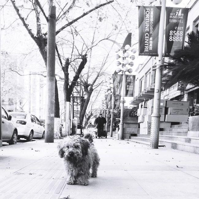 黑白 流浪狗 冬天