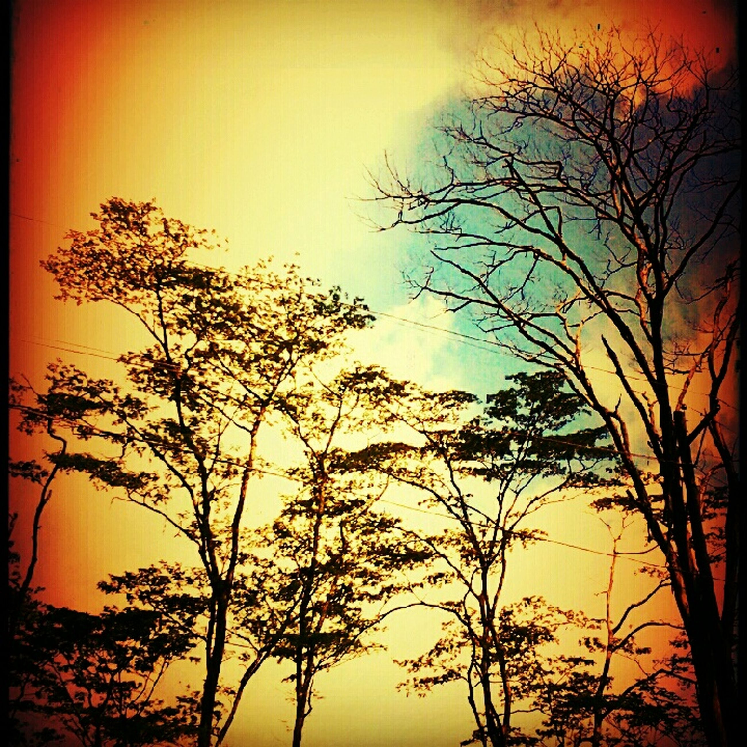 sunset, bare tree, silhouette, tree, branch, tranquility, orange color, scenics, tranquil scene, beauty in nature, sky, transfer print, nature, auto post production filter, idyllic, low angle view, clear sky, dusk, sun, outdoors