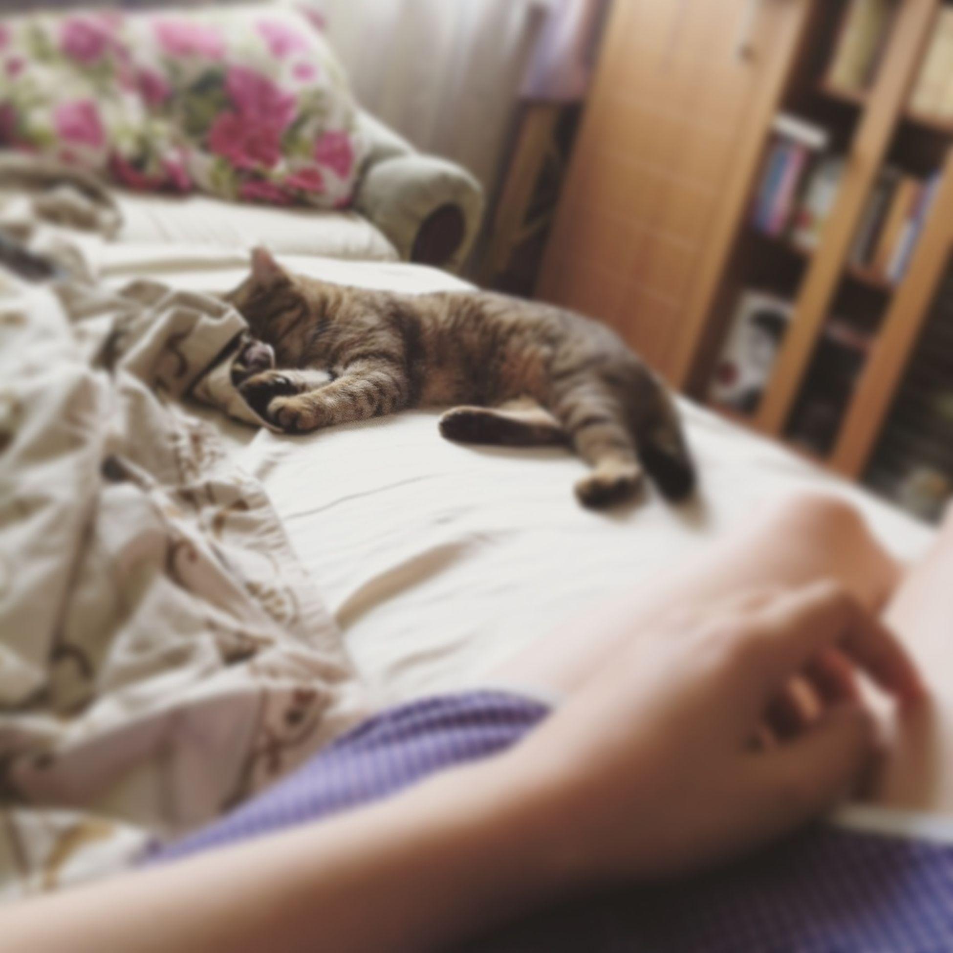 My lovely girl🐯💛 My Cat My Tiger