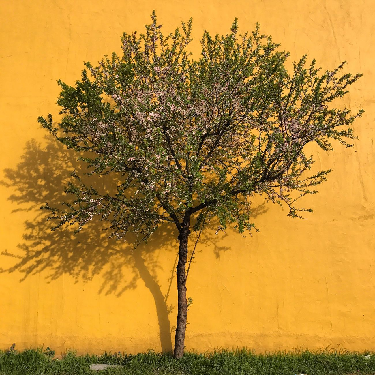 Pantone 123C Pantone123c Colors Colorful Yellow Wall Tree Spring Spring Flowers Yellow Color