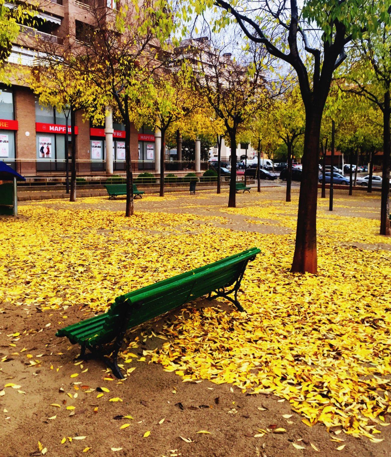 Colores de Otoño🍂 Autumn Otoño