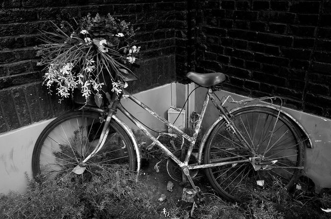 Bicycle Transportation Mode Of Transport Land Vehicle Stationary Parking Plant Wheel Parked Growth Outdoors Day No People Tianjin China Black & White Your Design Story Ricoh Gr Black And White Street Photo Stree Photography Street