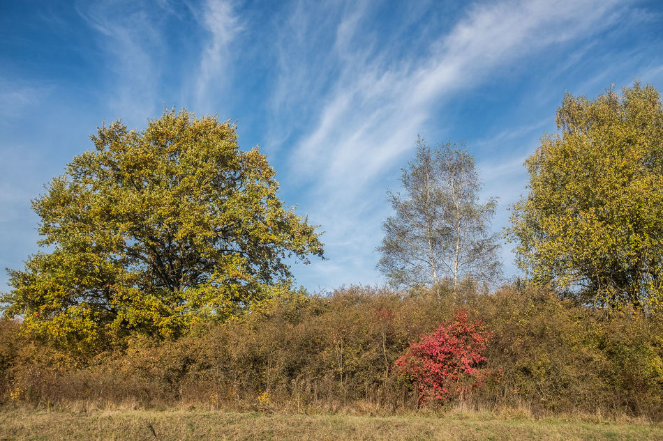 Autumn Beauty In Nature Black Forest Germany Cloud - Sky Day Freshness Growth Low Angle View Nature Outdoors Real People Sky Southern Germany Tree