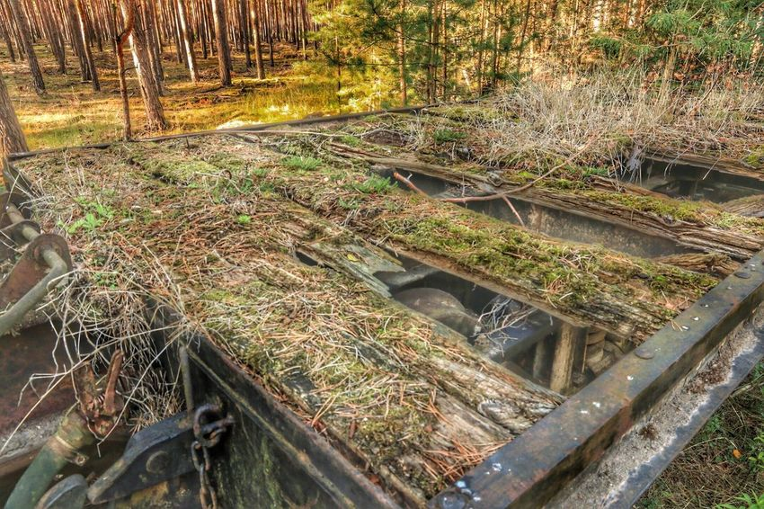 Nature Wagon  Bogie Carriage Forrest Forest Trees Green Wald Waldspaziergang Old Schrott