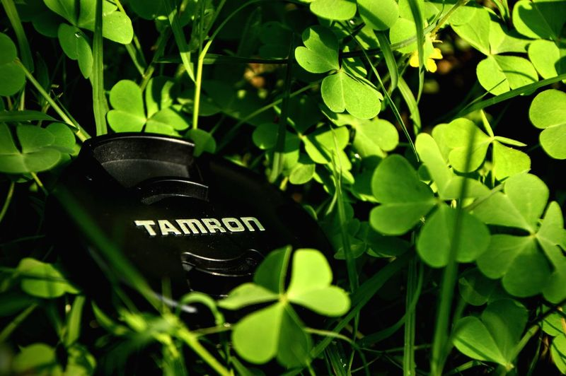 Go Green Feel Green Greenery Tamron Text Leaf Close-up Green Color Plant Growth No People