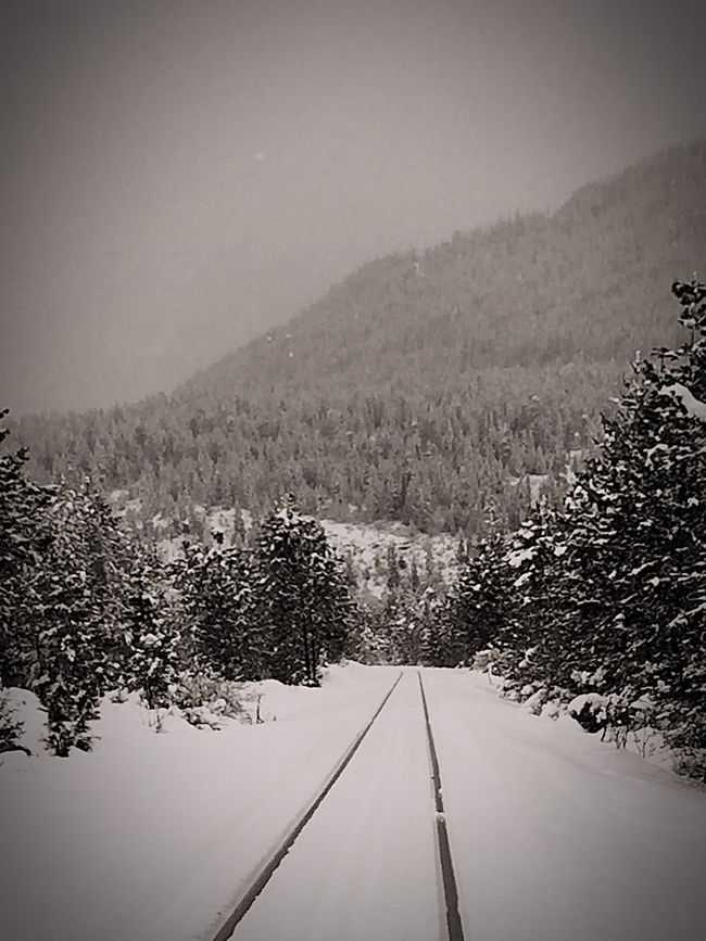 Train Tracks Vintage Photography Mountain View Peace And Quiet My Winter Favorites Winter 2015 Snow ❄ Eye4photography  Trees Serenity B&W Portrait
