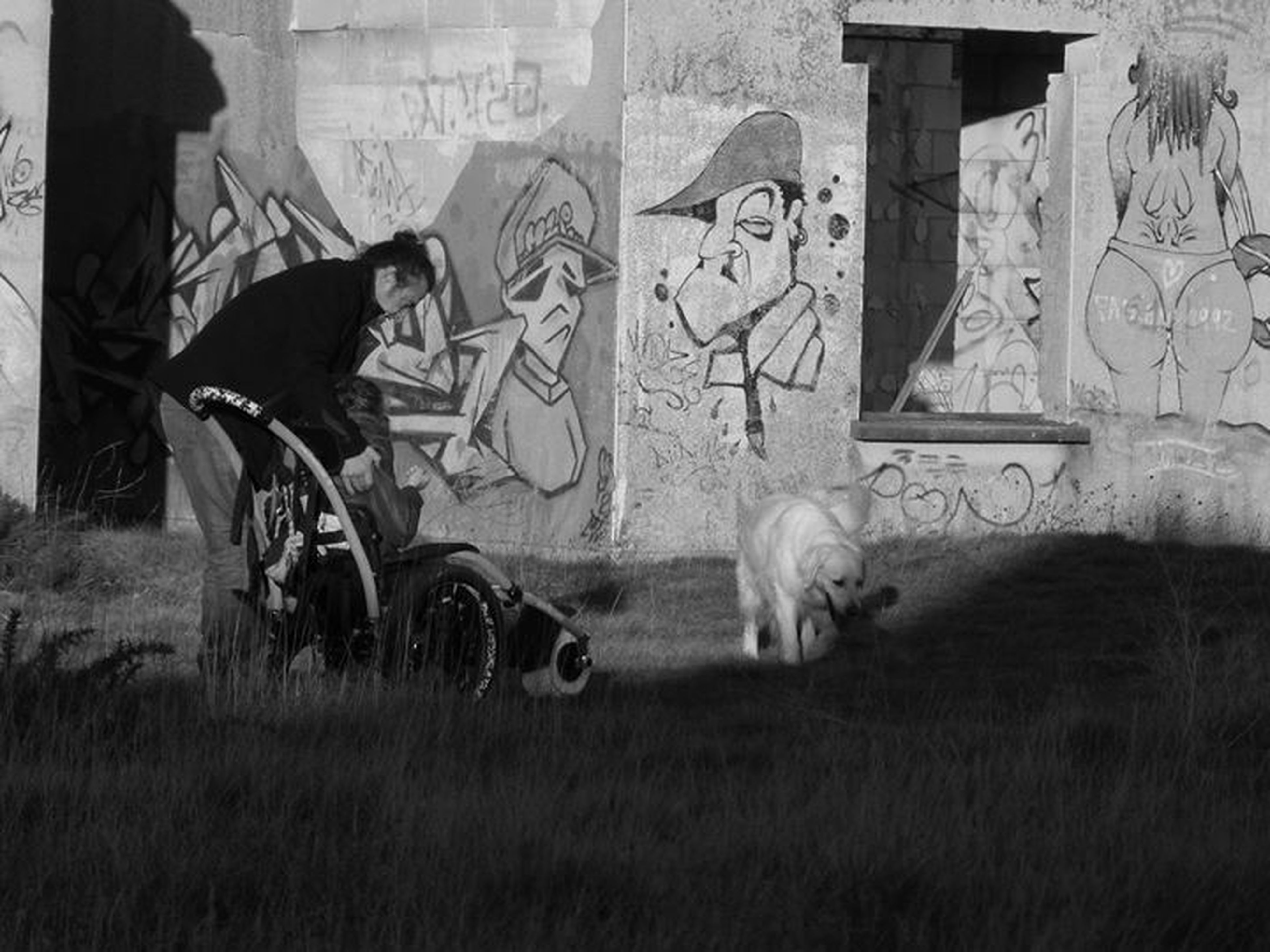 mammal, domestic animals, animal themes, grass, architecture, built structure, graffiti, one animal, field, building exterior, livestock, wall - building feature, pets, day, outdoors, no people, house, grassy, horse, standing