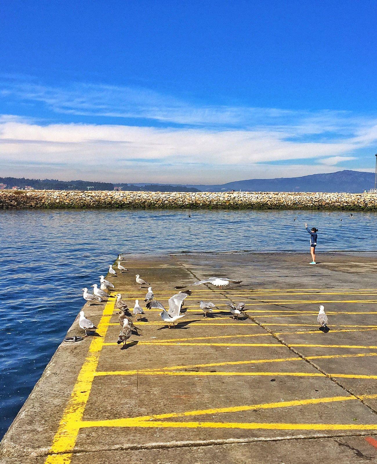 Seagulls Birds Sea And Sky