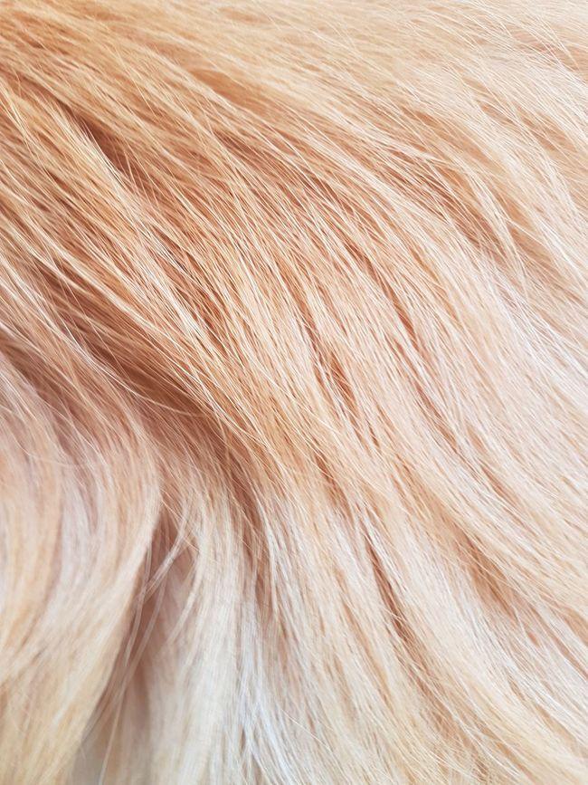 Animal Backgrounds Beauty In Nature Close-up Dog Fondo Fondo De Pantalla Fondos Full Frame Hair Horizontal Nature No People Outdoors Pelo