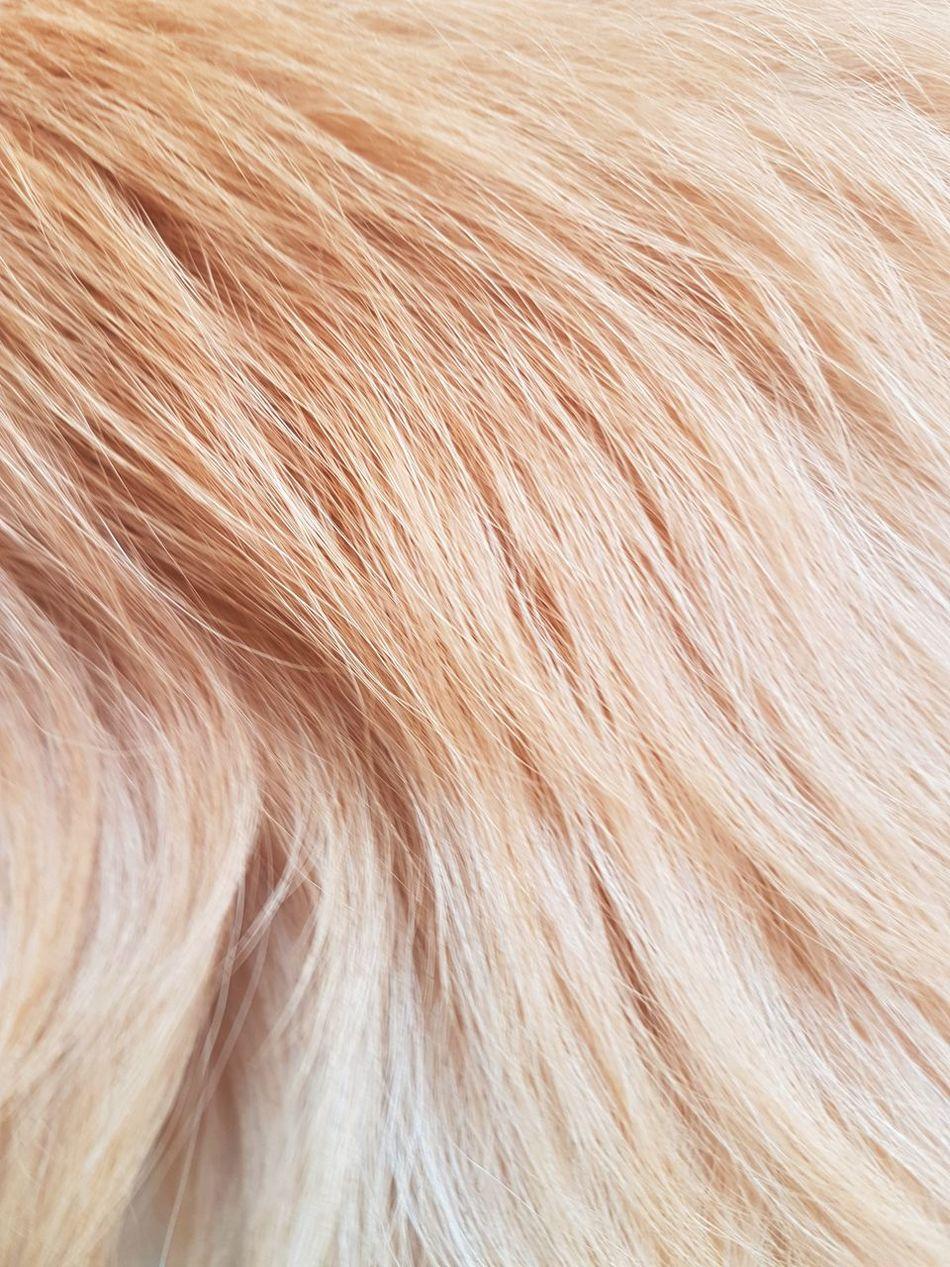 Animal Backgrounds Beauty In Nature Close-up Dog Fondo Fondo De Pantalla Fondos Full Frame Hair Horizontal Nature No People Outdoors Pelo Maximum Closeness