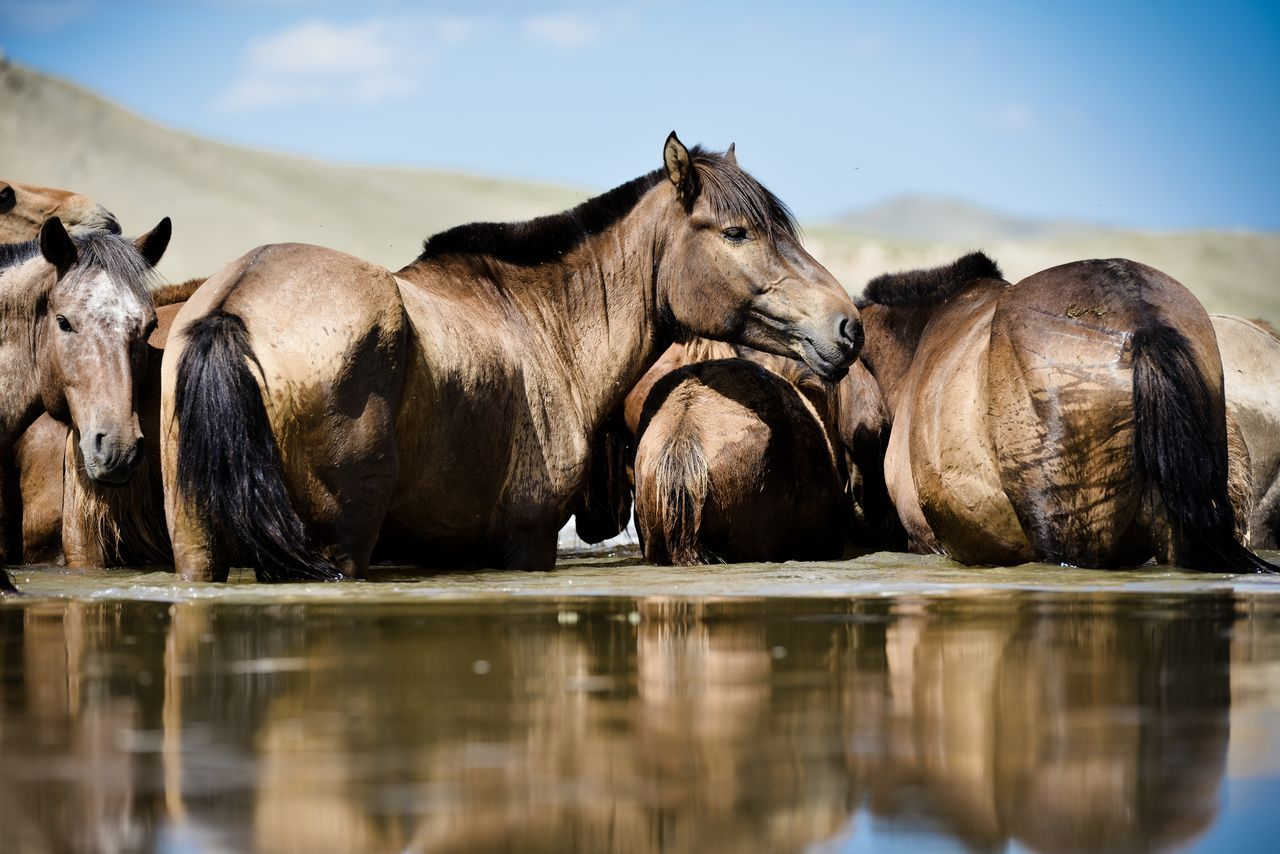 Beautiful stock photos of horse, Animal Themes, Cloud, Day, Horse