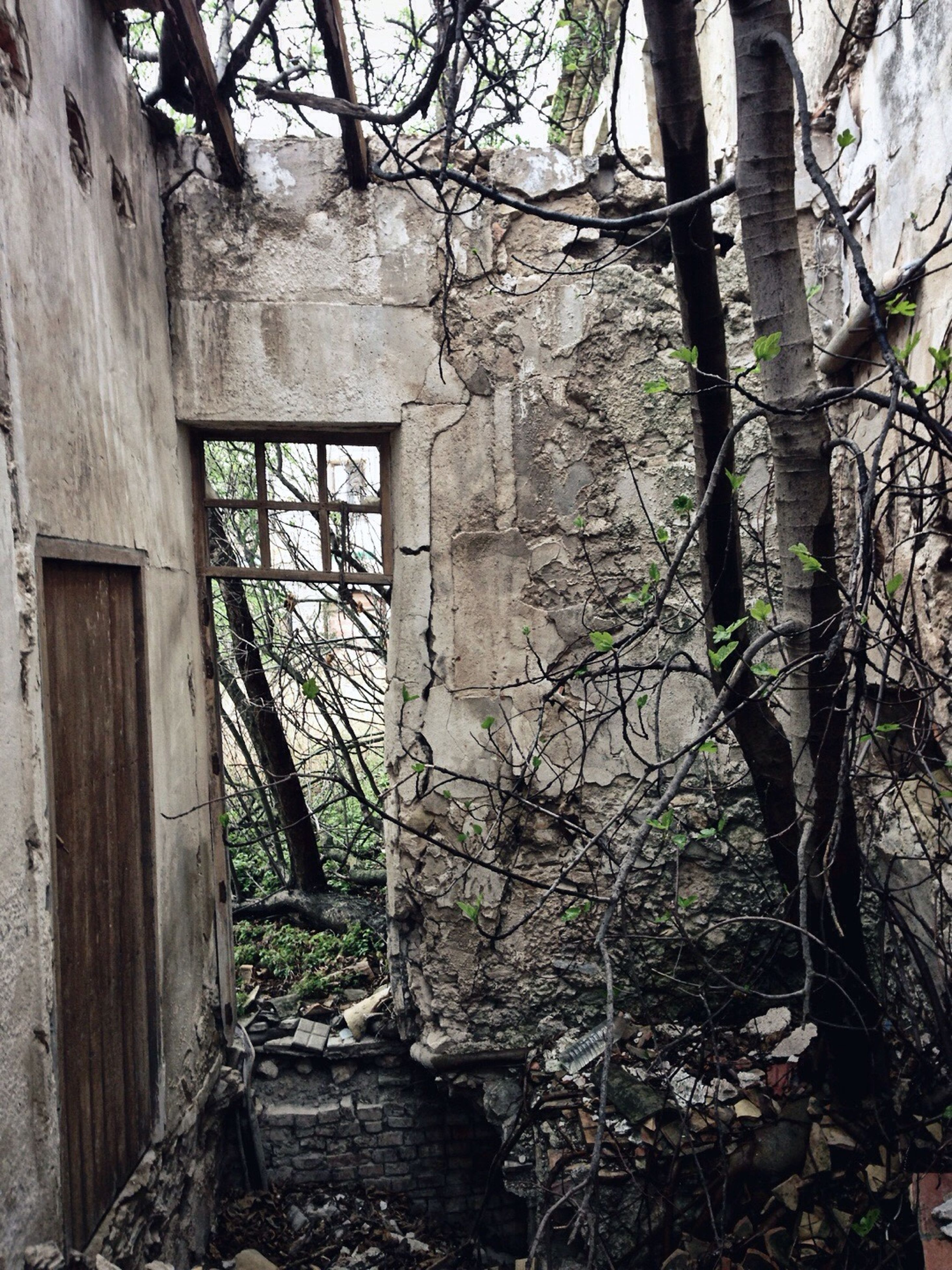 architecture, built structure, building exterior, tree, house, plant, abandoned, growth, branch, tree trunk, old, window, ivy, damaged, wall - building feature, day, no people, weathered, wood - material, residential structure