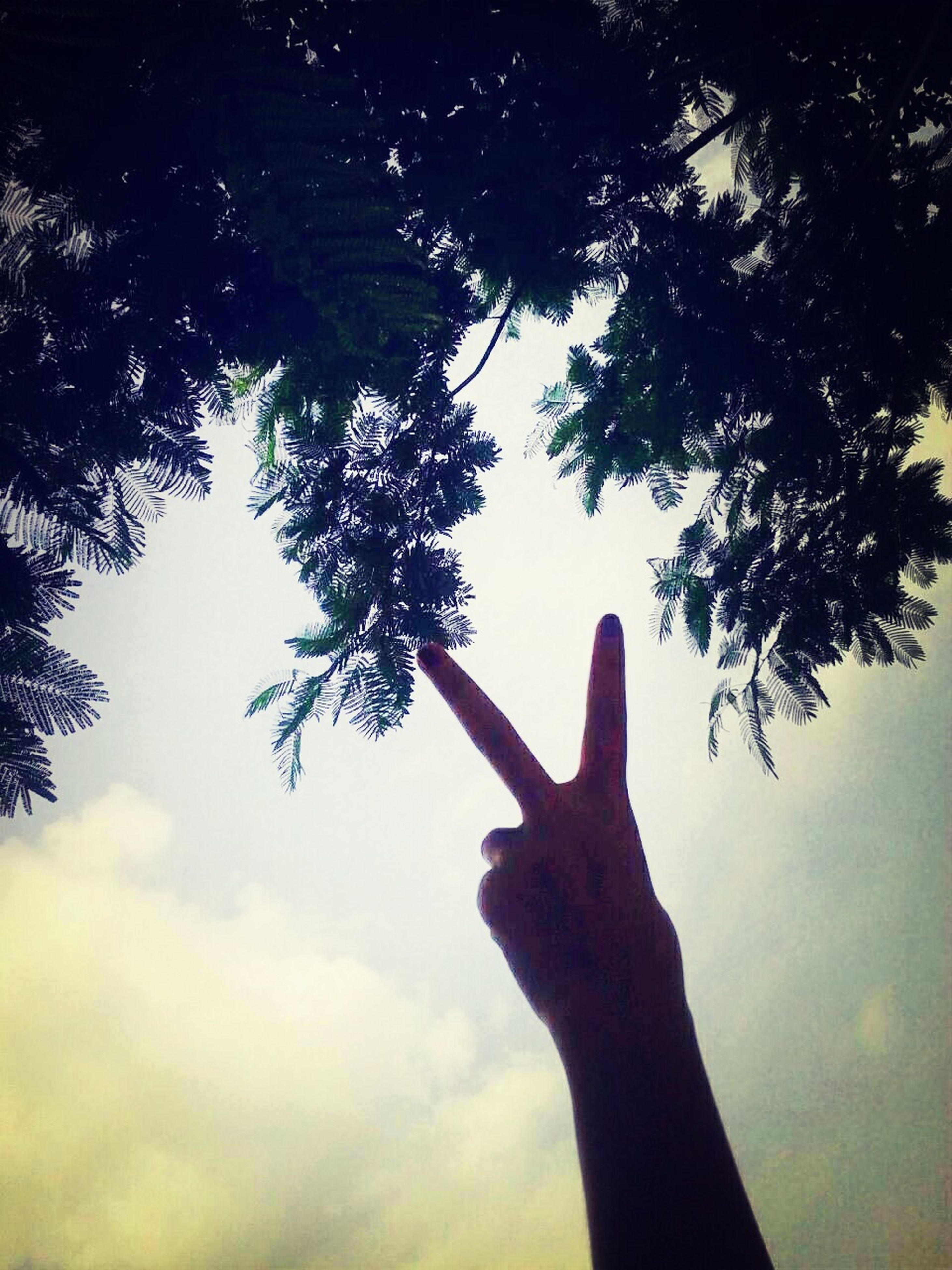 person, tree, part of, sky, cropped, low angle view, holding, human finger, silhouette, lifestyles, unrecognizable person, nature, cloud - sky, outdoors, day, personal perspective, leisure activity