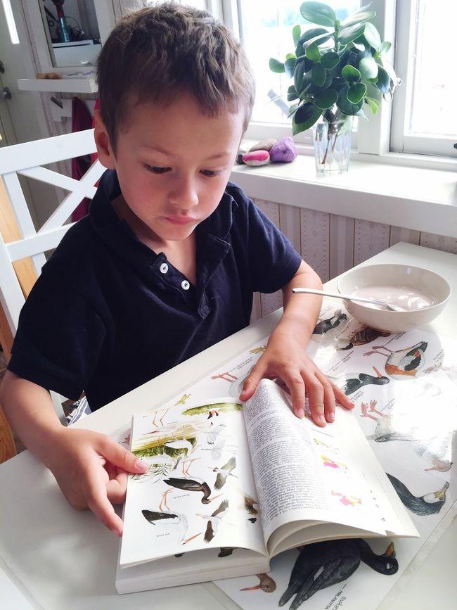 Birdwatching Bird Photography Sweden Children Summer Cottage 🐦