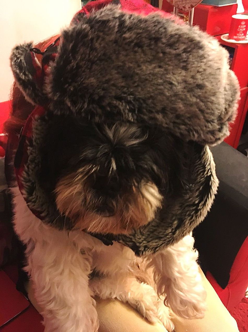 Chance Encounters Pets Domestic Animals Dog One Animal Winter Always Be Cozy Mammal Animal Themes Animal Hair Portrait No People Close-up Indoors  Day
