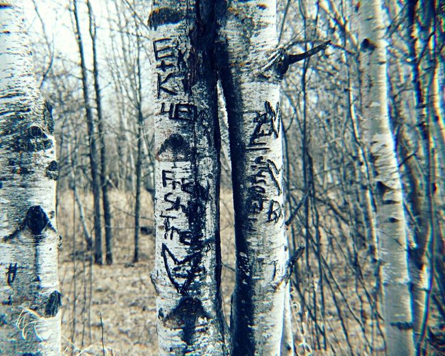 Showcase April Carved In Tree Carved In Wood Friendship Love Carved On Tree the friendship tree Bffs
